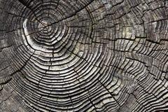 Gebrochener Baumstumpf stockfotografie
