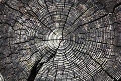Gebrochener Baumstumpf lizenzfreie stockbilder