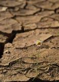 Gebrochener Boden mit einer einzelnen Blume lizenzfreies stockfoto