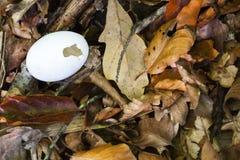 Gebrochenes Ei auf Waldfußboden Stockbilder