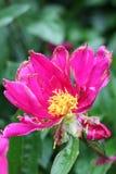 Gebroken bloem Royalty-vrije Stock Foto