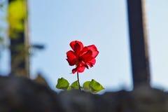 Gebroken bloem Stock Foto