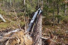 Gebroken bomen Royalty-vrije Stock Fotografie