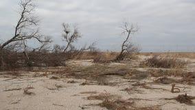 Gebroken bomen op een zandspit stock video