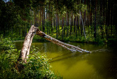 Gebroken boom Stock Afbeelding