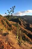 Gebroken boom, de herfstlandschap Stock Foto