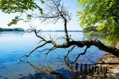 Gebroken boom door het water Stock Fotografie