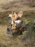 Gebroken boom in het meest forrest Royalty-vrije Stock Fotografie
