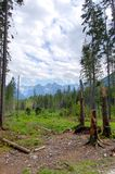 Gebroken boomboomstammen op de achtergrond van bergen Royalty-vrije Stock Foto