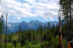 Gebroken boomboomstammen op de achtergrond van bergen Royalty-vrije Stock Afbeeldingen