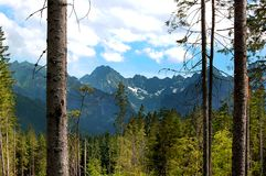Gebroken boomboomstammen op de achtergrond van bergen Stock Foto's