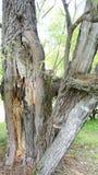 Gebroken boomboomstammen ter plaatse Stock Foto's