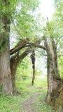Gebroken boomboomstammen ter plaatse Stock Afbeeldingen