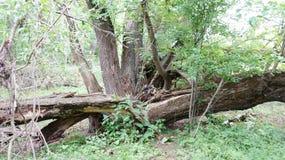 Gebroken boomboomstammen ter plaatse Stock Fotografie