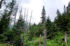 Gebroken boomstammen van bomen in een bergbos Stock Afbeelding