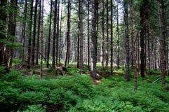 Gebroken boomstammen van bomen in een bergbos Royalty-vrije Stock Afbeeldingen