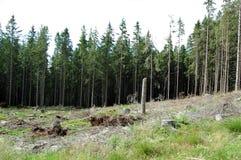 Gebroken boomstammen van bomen in een bergbos Stock Foto's