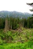Gebroken boomstammen van bomen in een bergbos Stock Fotografie