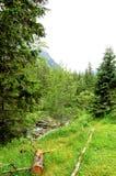 Gebroken boomstammen van bomen in een bergbos Royalty-vrije Stock Foto