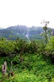 Gebroken boomstammen van bomen in een bergbos Stock Afbeeldingen