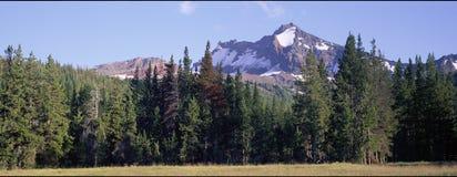 Gebroken Bovenkant van de Weide van het Park Royalty-vrije Stock Afbeelding