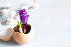 Gebroken ei en het violette abstracte symbool van krokuspasen van het nieuwe leven Royalty-vrije Stock Foto