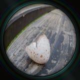 Gebroken eierschaal van mees in objectieve lens Stock Afbeeldingen