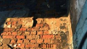 Gebroken glasfles op oude bakstenen muur langzame geanimeerde video stock videobeelden