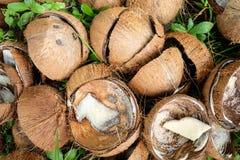 Gebroken halve kokosnotenshell in natuurlijk met gras Royalty-vrije Stock Foto