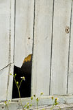 Gebroken houten omheining Royalty-vrije Stock Afbeelding