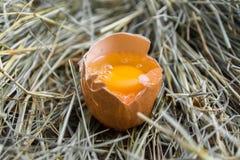 Gebroken kippenei De dooier van het ei Type in het gezicht hooi Landelijke mening Stock Foto