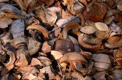 Gebroken kokosnotenachtergrond Stock Afbeeldingen