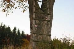 Gebroken ladder op boom in bos Stock Afbeelding