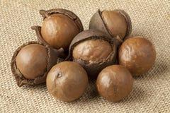 Gebroken macadamia noten Stock Afbeelding