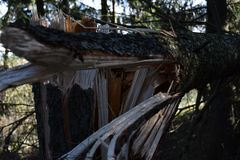Gebroken nette boom tijdens het onweer en de wervelwind Royalty-vrije Stock Foto's