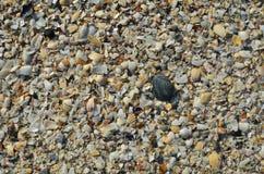 Gebroken overzees shells tapijt Royalty-vrije Stock Afbeeldingen