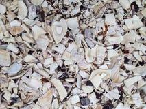 Gebroken overzeese shells stock foto's