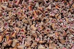 Gebroken overzeese shells op een strand Royalty-vrije Stock Afbeeldingen