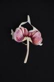 Gebroken roze knoflookclose-up op een zwarte achtergrond stock afbeeldingen