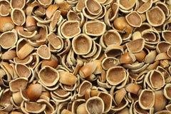 Gebroken shells van hazelnoten royalty-vrije stock afbeeldingen