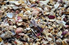 Gebroken stukken overzeese dicht omhoog geschoten shells stock foto's