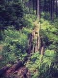 Gebroken voetgangersbrug in een bos in de bergen royalty-vrije stock foto's