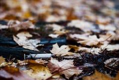 Gebruikte spuit ter plaatse onder de de herfstbladeren stock foto