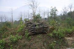 Gebundene Niederlassungen im Wald Stockbilder