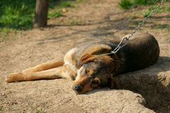 Gebundener Hund lizenzfreie stockfotos