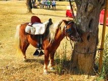 Gebundenes oben Pony Stockfotografie