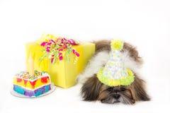 Geburtstag-Hündchen Stockfotos