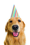 Geburtstag-Hund Stockfotos
