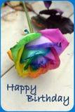 Geburtstag Rose Stockfotos