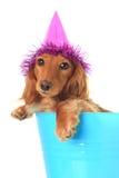Geburtstagwelpe stockfoto